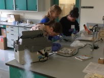 Workshop Group A preparing samples for cryomilling